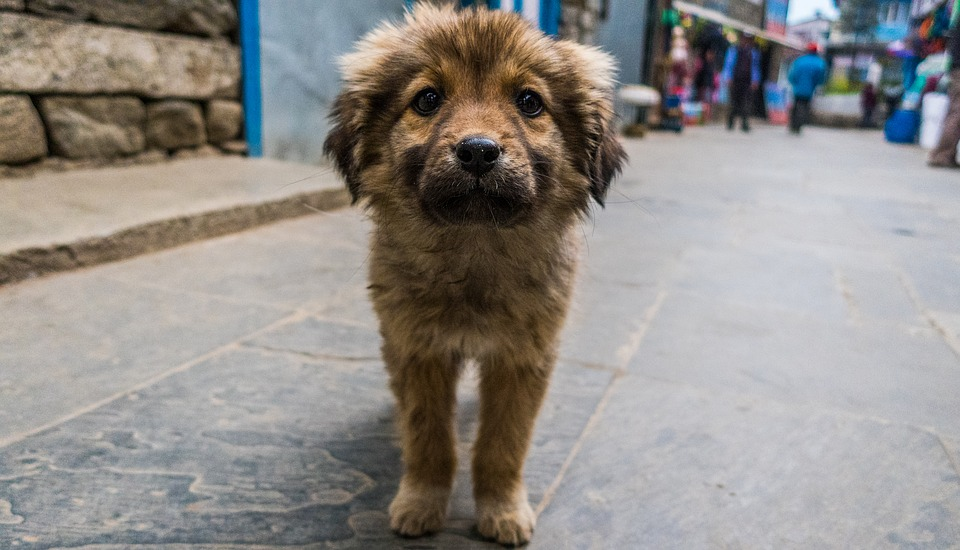 Mascotas cambian y enriquecen vidas, pero requieren de cuidador@s responsables